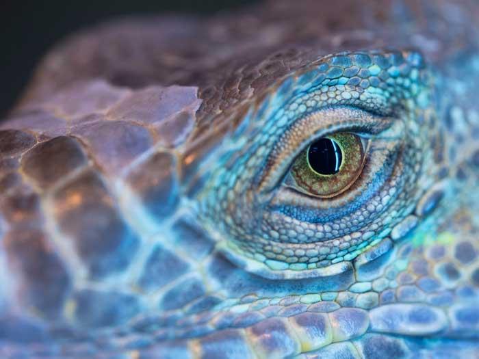 reptiles eye